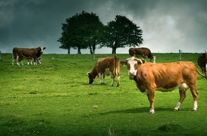 benefits-of-grass-fed-beef